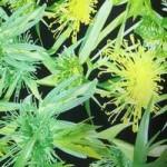 иск.кожа-принт  цветочныйbr>1100 руб за 1 м
