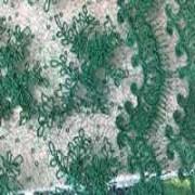 Kruzhevo-Orhideya-izumrud